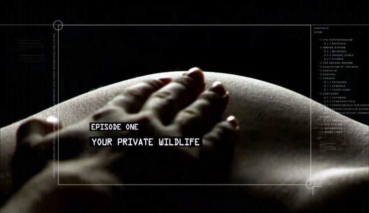 Your Private Wildlife