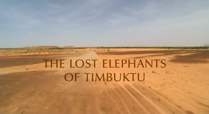 BBC Natural World The Lost Elephants of Timbuktu DVB XviD MP3  org avi preview 0