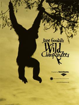 IMAX Jane Goodalls Wild Chimpanzees DivX AC3  org avi preview 0
