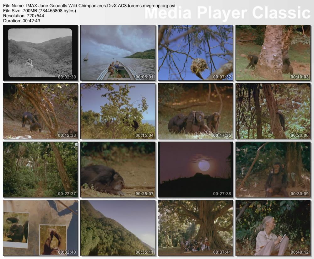 IMAX Jane Goodalls Wild Chimpanzees DivX AC3  org avi preview 1