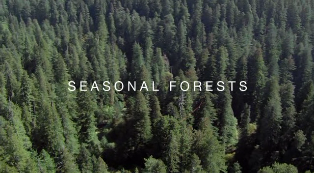 Seasonal Forests (Planet Earth 10/11)