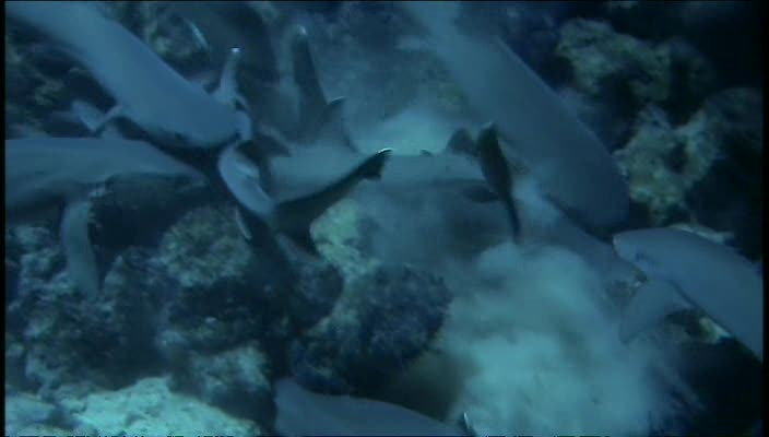 BBC Dive To Shark Volcano XviD AC3 avi preview 1