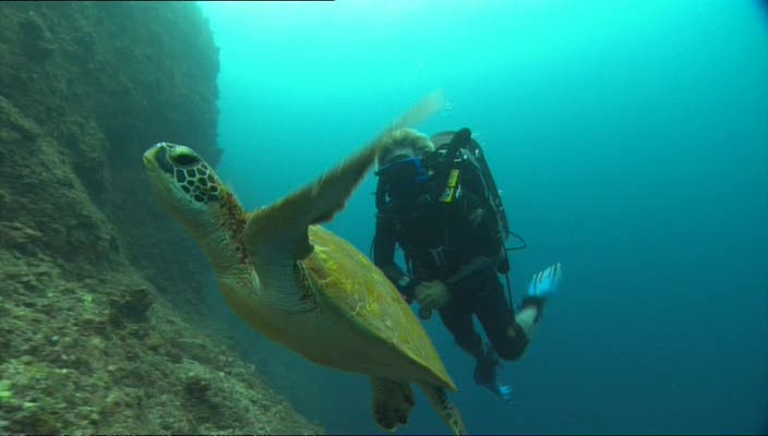 BBC Dive To Shark Volcano XviD AC3 avi preview 2
