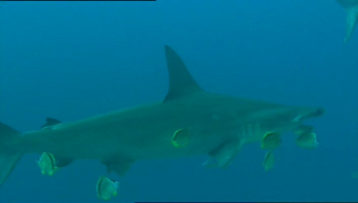 BBC Dive To Shark Volcano XviD AC3 avi preview 3